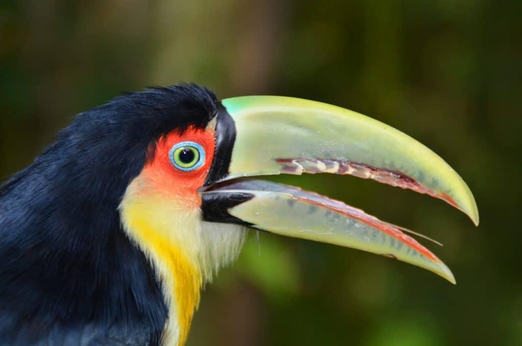ציפור מקור ירוק