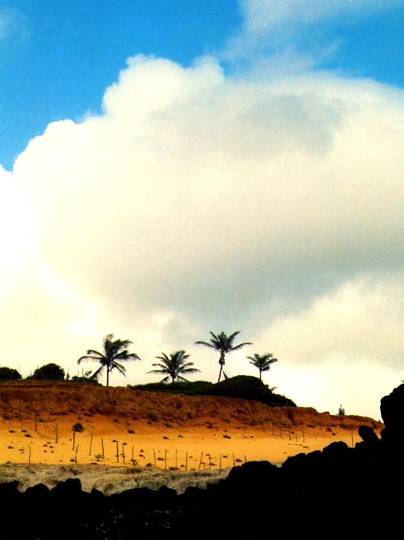 דקלים בברזיל - שלומי הפקות