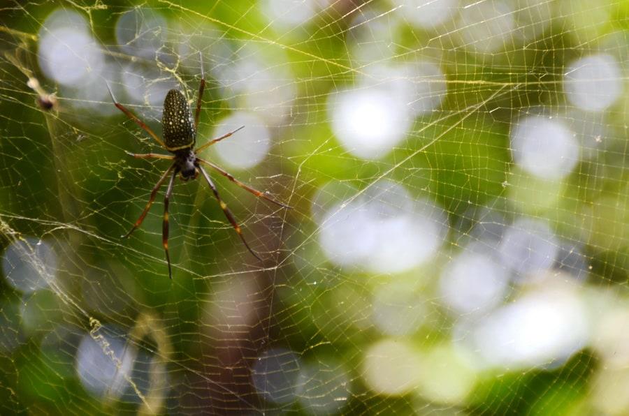 עכביש ברשת - שלומי הפקות