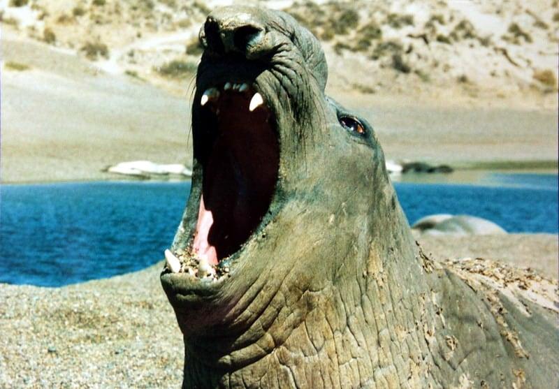 פיל ים - שלומי הפקות