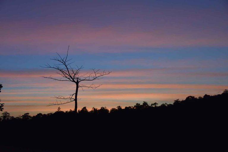 עץ בודד - שלומי הפקות
